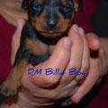 Billi Boy mit offenen Augen 16 Tage
