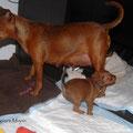 Flitzemaus Faye rasch an Mami vorbei in das Bettchen.