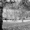 Rehberge im Herbst