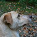 Gigi (2006 - 2010, Mischling)