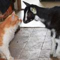 Les animaux de compagnie et ceux de la ferme