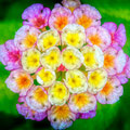Colorful cluster