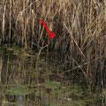 12 Agrate, vasca Volano, 08.03.2014