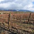 Vignes sur la route de Perpignan