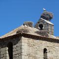 Les cigognes adorent cette région : vous les trouverez sur les points les plus hauts tels que poteaux électriques, clochers...