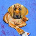 Aud´s Hund         2015             60x60   Acryl auf Lwd.