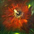 Auge der Blume        2007           60x60            Acryl auf Lwd.