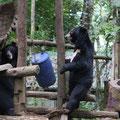 Bear Rescue Centre, Luang Prabang