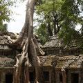 Ta Phrom, Siem Reap