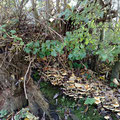 November 2014 - Pilze am Garten