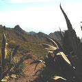 Mirador Santiago del Teide, Teneriffa