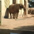 象は竹も食べるんですって!