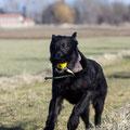 Garys Anti-Jagdprogramm: Lieblingsball auf dem Weg fallen lassen, ein paar hundert Meter weitergehen und Hund in wahnwitziger Geschwindigkeit in Richtung Ball sprinten lassen.