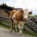 Achtung, neugierige Kuh! Erst geht sie mit großen Augen an dir vorbei, nur um sich dann hinterrücks anzuschleichen. Verrückte Viecher!