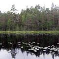 Nationalpark, der Dritte. Norra Kvill.