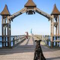 Selliner Seebrücke: Schnauzer flaniert und posiert.