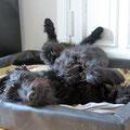 Chillen I. Auf eine Stunde Hundesport folgen viele, viele Stunden Hundeschlaf.