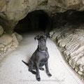 Cave Dog.