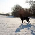 Schneelandschaft mit Hund.