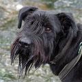 Auch im Großstadtdschungel: Tief im Inneren ist Gary immer noch Seehund.