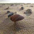 Muschel im Wind (Calais)