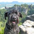Geschafft: Hund auf dem Berg!