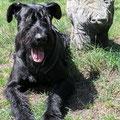 Mein Freund, das Schwein (Hiddensee).