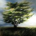 Cypress #1 900x900cm