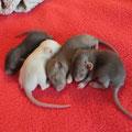 Les 4 petits mecs