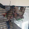 Un tas de ratons