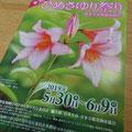 これからヒメサユリの季節です!浅草岳のヒメサユリが楽しみです