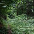 車道を歩くのは嫌なので、林道を歩きます。あまり人が歩いていないようです