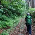 下山ルートは廃道に近い旧参道をチョイス