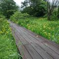 三依湿生園を歩いてみました。あまり管理されていないようでもったいないです。いまちょうど見頃です
