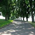 © Traudi – Schloss Taxis, Schlossallee
