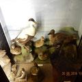 ein Ausschnitt aus der Wildlife-Ausstellung