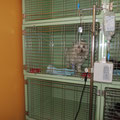 Katzen Aufwachraum