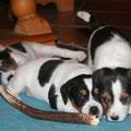 Fritzi und Wilma