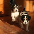 Maxl und Fritzi