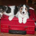 Das 1. Köfferchen ist schon gepackt