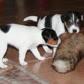 Lotti und Maxl mit Fuchslunte