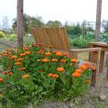パーゴラの休憩所に咲くキンセン花