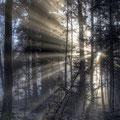 24.12.2012 weihnachtliche Morgenstimmung