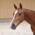 Die kleine Niki, Stute, geb. 2006
