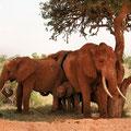 Kenia - 2 Monate Afrika Safari