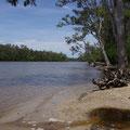 Das Camp liegt direkt am Noosa-River...