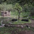 Er wohnt und arbeitet hier ganz idyllisch. Er baut Tore aus Bambus und legt oekologische Gaerten, wie diesen hier, an.