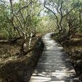 ... wie der hier durch die Mangroven...