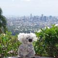 ...auf dem Mt. Coo-tha, von dem aus man auf Brisbane schauen kann.
