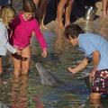Von mir gibts leider kein Foto, aber so habe ich den Delphin auch fuettern duerfen.